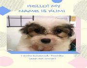 Cross bred with maltese -- Dogs -- Isabela, Philippines