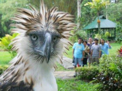 2 nights at paradise island davao with davao tour, -- Travel Agencies Paranaque, Philippines